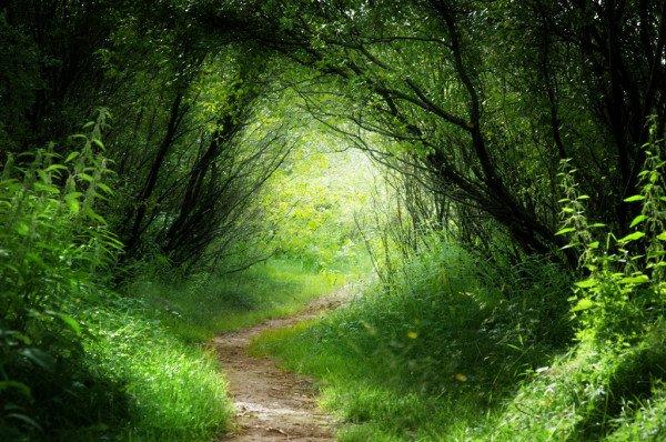 Ulkoilu metsässä